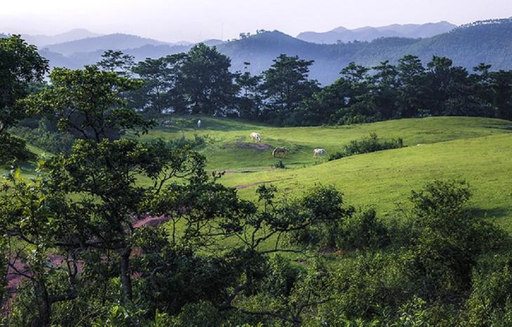 """Thăm """"bạch mã"""" ở thảo nguyên Khau Sao, Lạng Sơn - ảnh 2"""