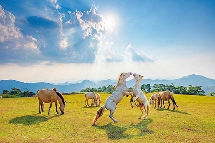 """Thăm """"bạch mã"""" ở thảo nguyên Khau Sao, Lạng Sơn - ảnh 9"""