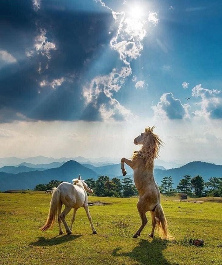 """Thăm """"bạch mã"""" ở thảo nguyên Khau Sao, Lạng Sơn - ảnh 10"""