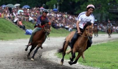 バクハ県の競馬 - ảnh 1