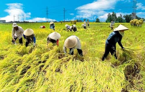 ベトナム農民協会、2016年の活動を総括する - ảnh 1