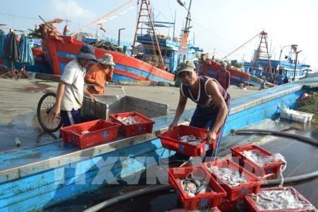 ベトナム、漁業に関するEUの勧告の実施に努力 - ảnh 1