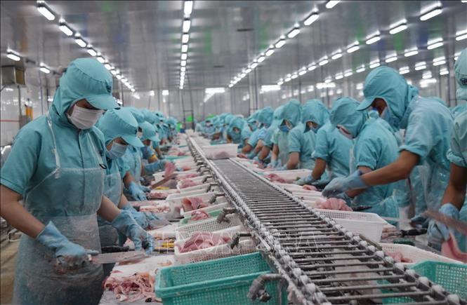 ベトナム水産物の輸出 著しく回復の見通し - ảnh 1