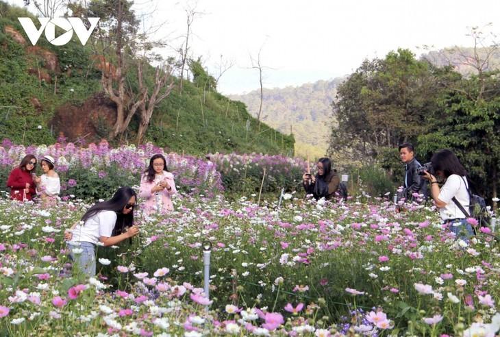 農業体験ツアーの発展に取り組むラムドン省 - ảnh 2