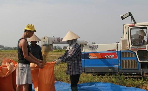 """推广""""四方""""合作模式,创造价值链,协助发展九龙江平原地区农业 - ảnh 1"""