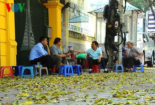 河内人面果树的夏季黄叶 - ảnh 10