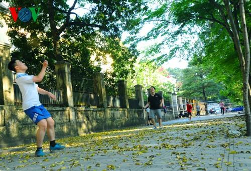 河内人面果树的夏季黄叶 - ảnh 11