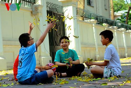 河内人面果树的夏季黄叶 - ảnh 12