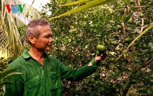 高棉族农民石弟成为二好干部的故事 - ảnh 1