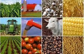 《跨太平洋伙伴关系协定》是推动农业结构重组的机会 - ảnh 1