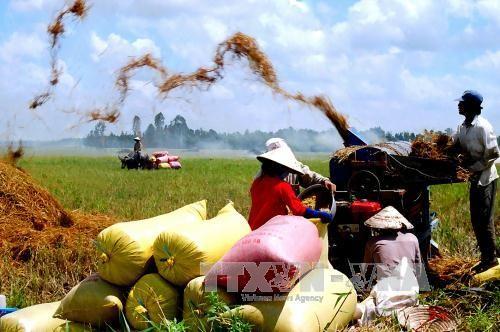 选民高度评价农业部门的各项可持续发展措施 - ảnh 1