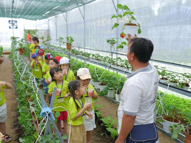 依靠有机农业模式创业致富 - ảnh 2