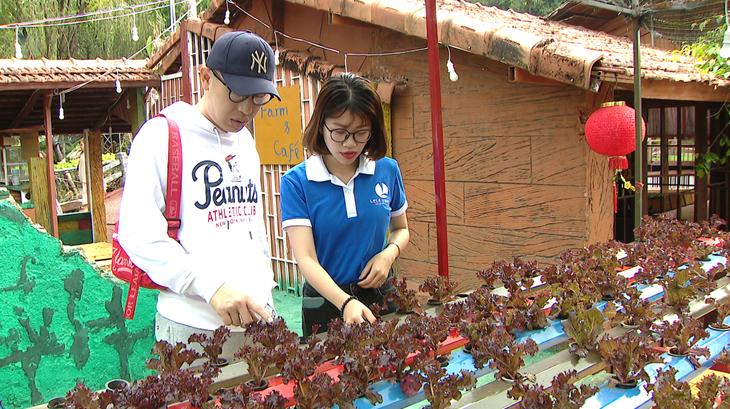 农园民宿旅游——嘉莱省旅游发展的新方向 - ảnh 5