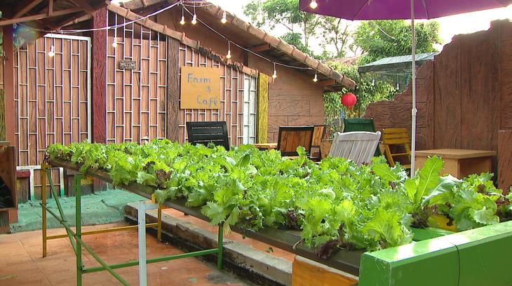农园民宿旅游——嘉莱省旅游发展的新方向 - ảnh 3