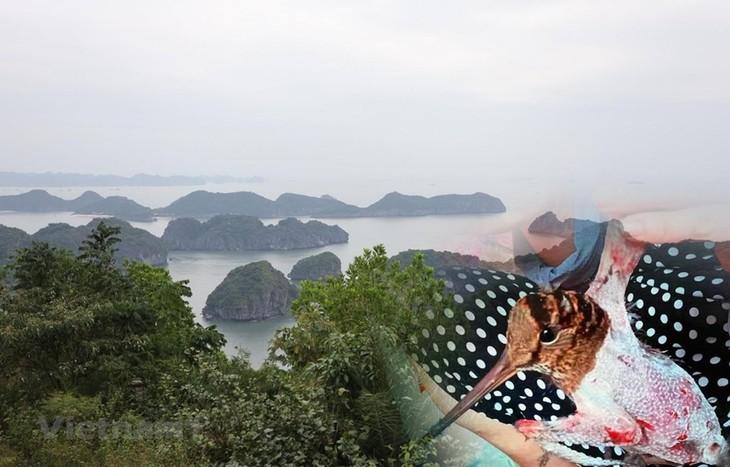 越南主动跨入恢复生态系统时期 - ảnh 1