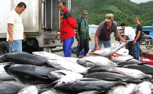 Negara-negara anggota Komite Profesi Perikanan Asia – Pasifik perlu melakukan konektivitas, bekerjasama dan melaksanakan kesatuan aksi - ảnh 1