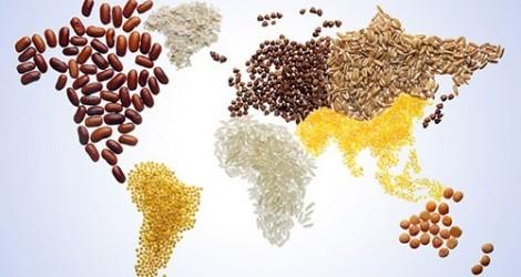 Quelles solutions pour répondre aux défis de la sécurité alimentaire mondiale? - ảnh 1