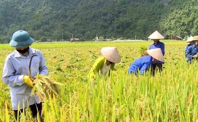 Nahrungssicherheit: Vietnam auf Platz 4 in Südostasien - ảnh 1