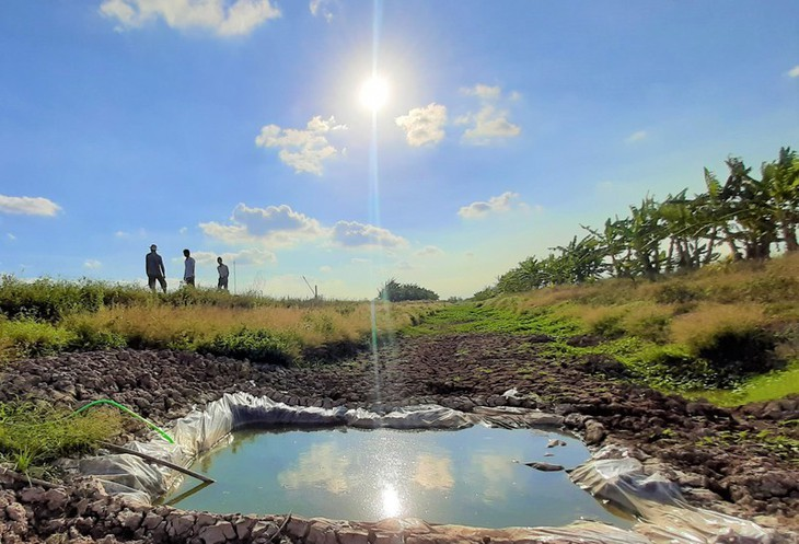 Dürre stört das Kap Ca Mau - ảnh 1