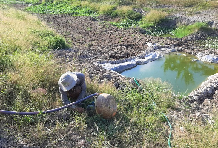 Dürre stört das Kap Ca Mau - ảnh 8