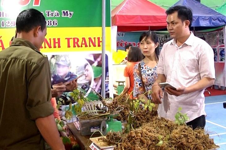 Markttag von Ginseng Ngoc Linh in der Provinz Quang Nam - ảnh 1