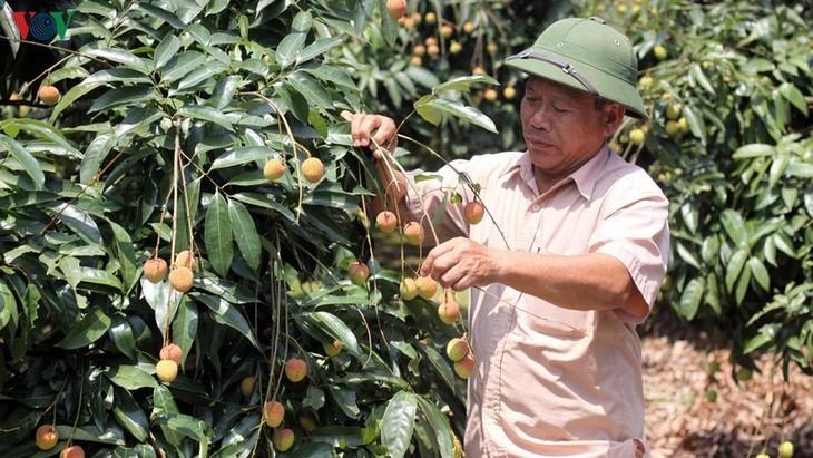 Vietnam und China: Bewältigung der Schwierigkeiten zum Verbrauch von Agrarprodukten - ảnh 1