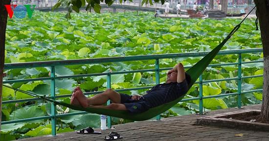 Lotus im Westsee am frühen Morgen - ảnh 11
