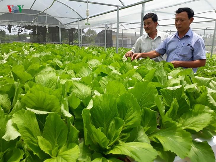 Start up mit Gemüseanbau mit Hochtechnologie in Quang Nam - ảnh 1