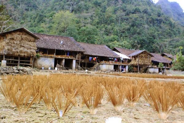 Die traditionelle Herstellung von Räucherstäbchen der Volksgruppe der Nung An in Cao Bang - ảnh 2