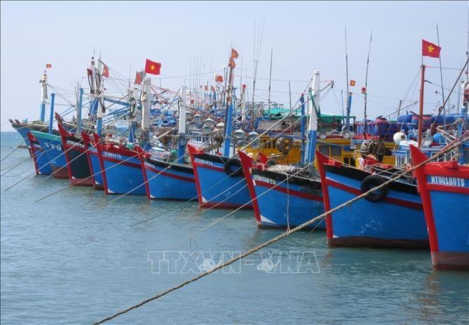 Webseite Foreign Affairs Asia: Vietnam gibt sich Mühe, um gelbe Karte gegen IUU-Fischerei aufzuheben - ảnh 1