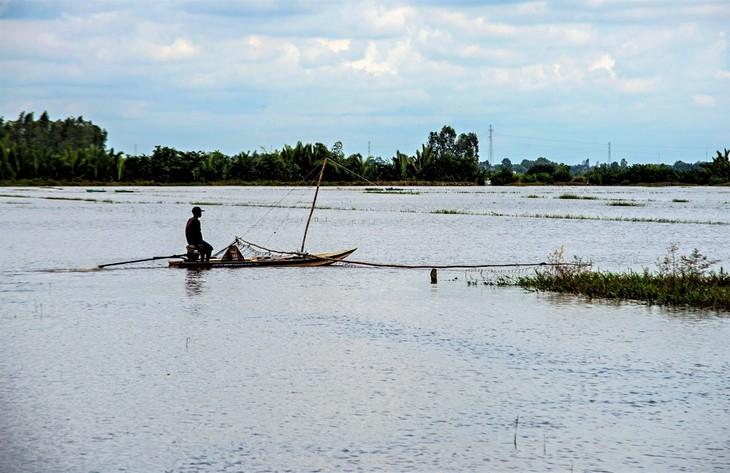 Bauern in An Giang warten auf Hochwassersaison - ảnh 1