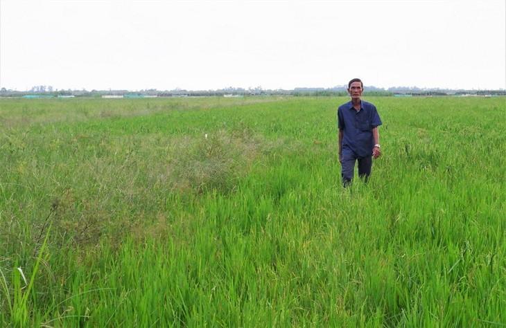 Bauern in An Giang warten auf Hochwassersaison - ảnh 2