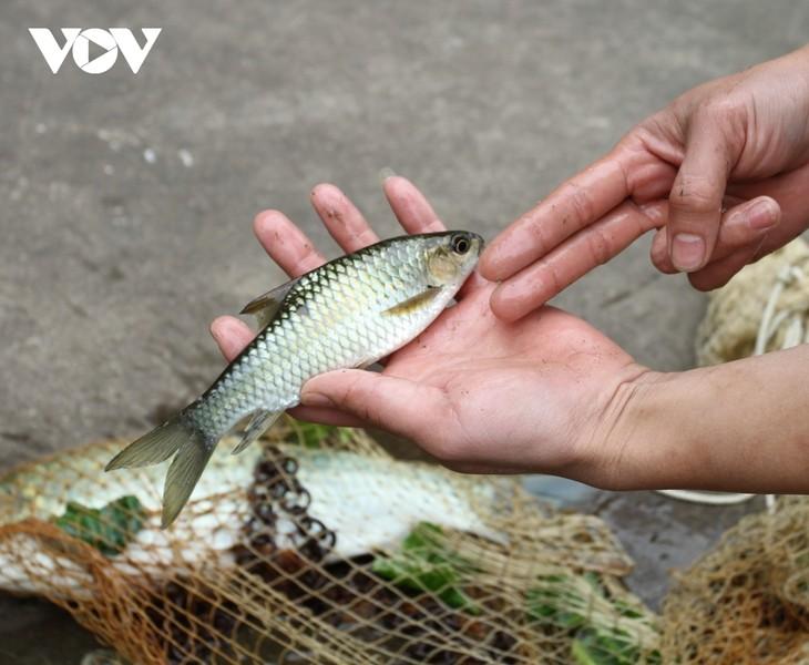 Bong-Fisch: Köstliches Gericht der Volksgruppe der Tay in Yen Bai - ảnh 1