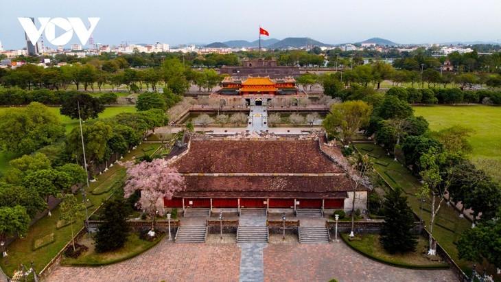 Wutong-Bäume blühen in der Hue-Zitadelle - ảnh 13
