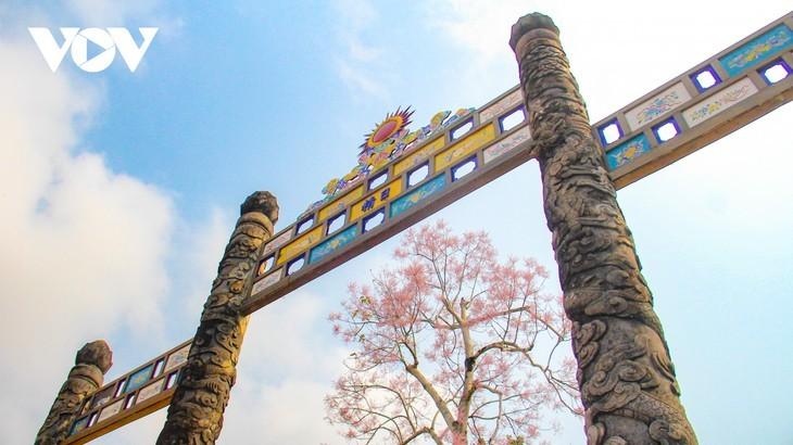 Wutong-Bäume blühen in der Hue-Zitadelle - ảnh 9