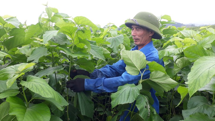 Tran Yen: Der erste ländliche Kreis neuen Stils im Nordwesten - ảnh 1