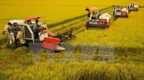 Memperluas batas kepemilikan lahan untuk menuju ke produksi besar-besaran  di daerah dataran rendah sungai Mekong - ảnh 1