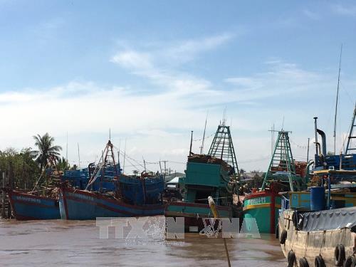 Daerah-daerah di Vietnam aktif menggelarkan opsi untuk mencegah dan menanggulangi taufan Tembin - ảnh 1