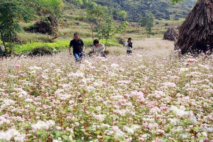 """Acara Pembukaan Festival Bunga Gandum Kuda  """"Warna Merah Muda di Daerah Dataran Tinggi Batu"""" - ảnh 1"""