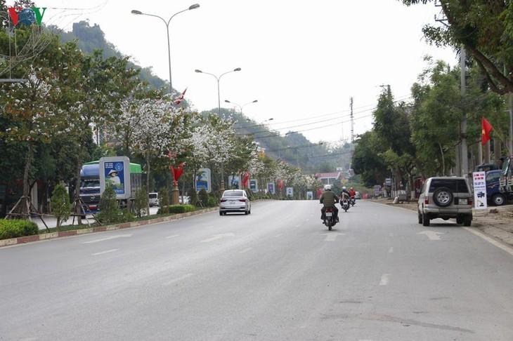 Bunga Ban – bunga melambangkan  gunung dan hutan di daerah Tay Bac - ảnh 2