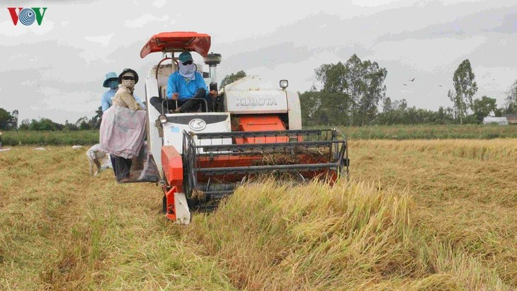 Daerah dataran rendah sungai Mekong dengan peranan menjamin ketahanan pangan nasional - ảnh 1