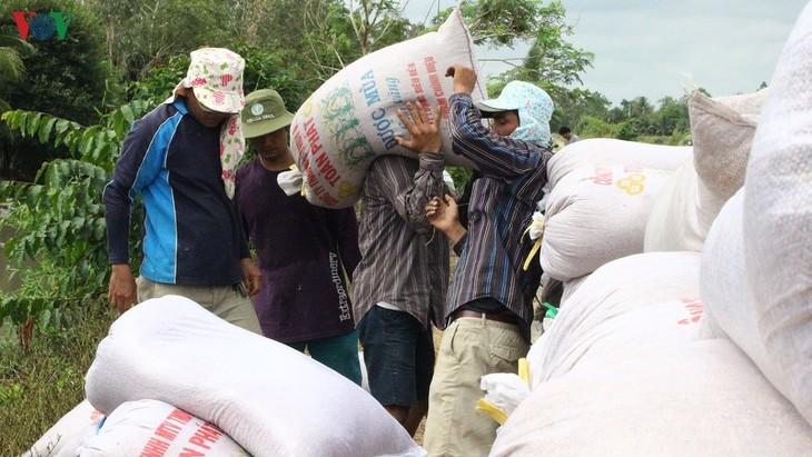 Daerah dataran rendah sungai Mekong dengan peranan menjamin ketahanan pangan nasional - ảnh 2