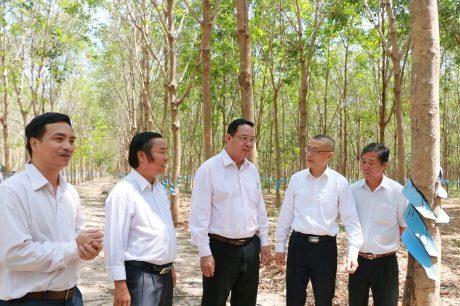 Badan usaha Vietnam mengembangkan penanaman pohon karet dan turut menciptakan lapangan kerja untuk tenaga kerja di Kamboja - ảnh 1