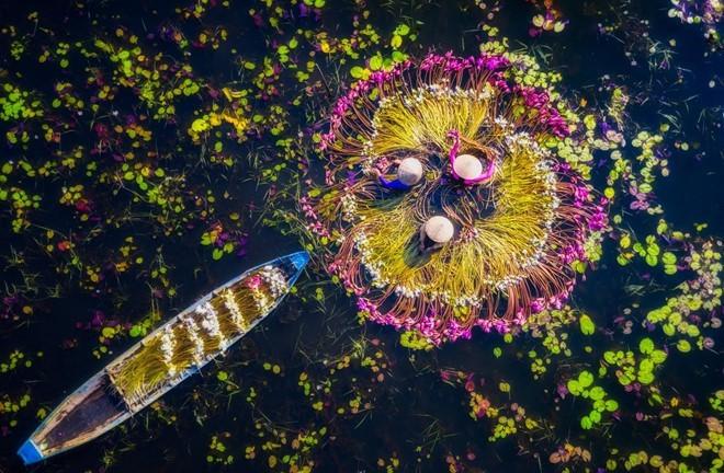 Foto karya fotografer Inggris tentang sepeda motor yang menjajakan ikan hias di Vietnam meraih hadiah di AS - ảnh 4