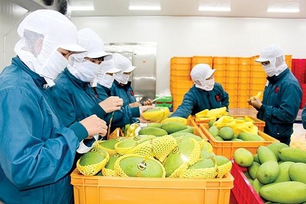 Ekspor pertanian, kehutanan dan perikanan merosot hampir 17% pada bulan April - ảnh 1
