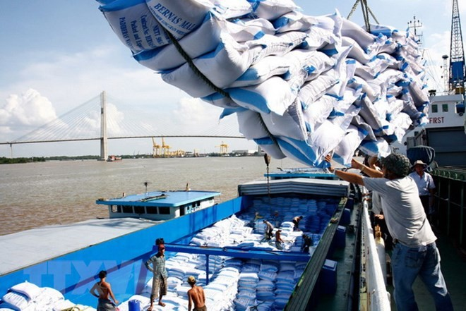 Vietnam sees hike in rice exports to Africa - ảnh 1