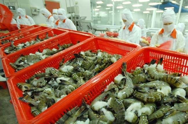 Абсурдные пошлины на экспортируемые в США вьетнамские креветки - ảnh 1