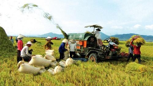 Вьетнам активизировал реструктуризацию сельского хозяйства в 2013 году - ảnh 1