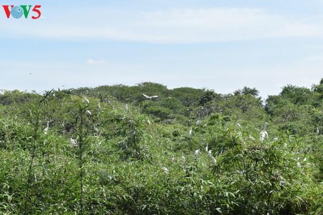 Аистовый сад Бангланг недалеко от города Кантхо - ảnh 1