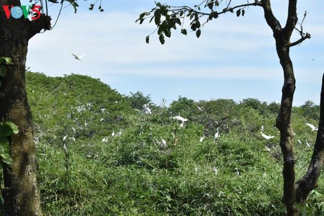 Аистовый сад Бангланг недалеко от города Кантхо - ảnh 3